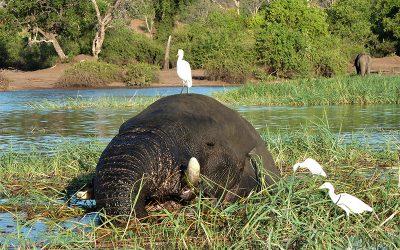 Botswana, le Graal de l'Afrique Sauvage