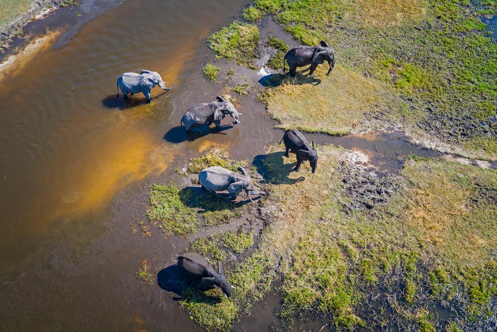 Élephants dans la Delta de l'Okavango, Réserve sauvage de Moremi