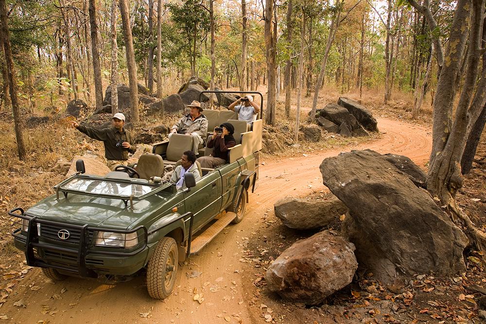 Safari au Madhya Pradesh