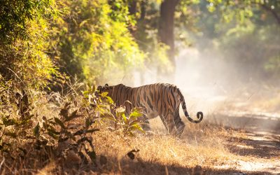 Madhya Pradesh or the birth of the jungle book