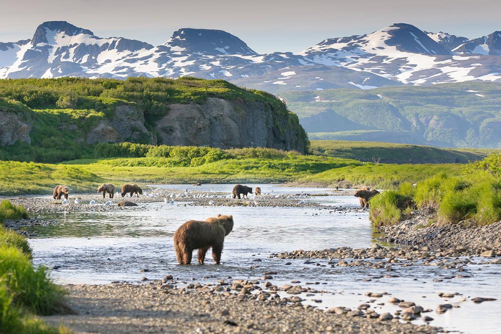 White Safari in Alaska
