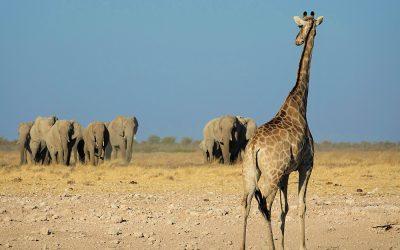 Namibie, la Terre de tous les contrastes