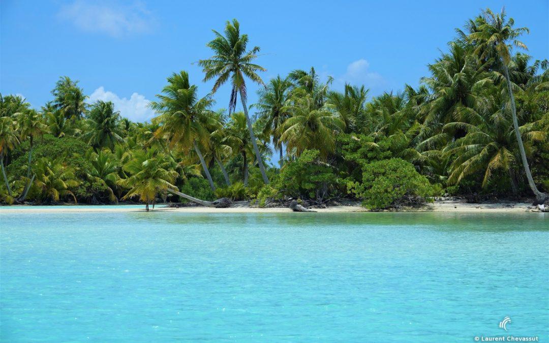 Blue Safari in Polynesia